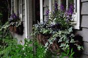 Garden Window Boxes